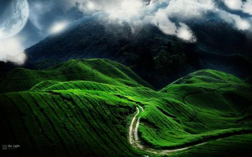 road fields strips green bends relief